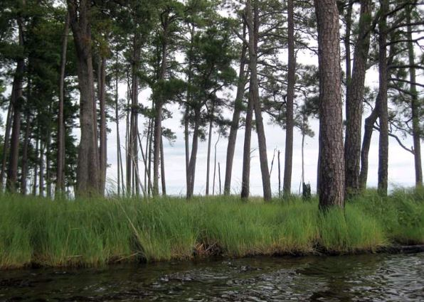 The refuge is home to mixed hardwood and loblolly pine forests, along with rich tidal marshes.