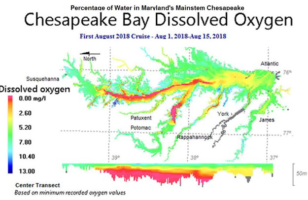Data from the first August cruise: August 1-15, 2018. Courtesy MD DNR