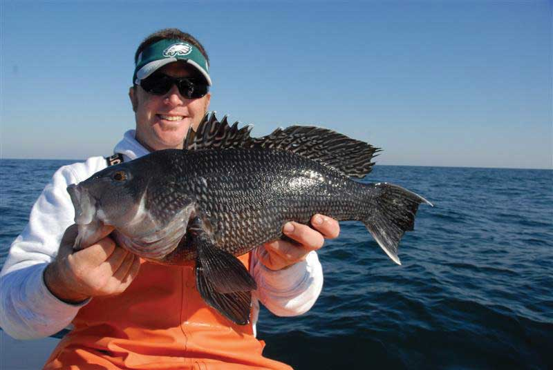 Roger Burnley with a nice black sea bass. Check local laws as to open seasons for black sea bass.