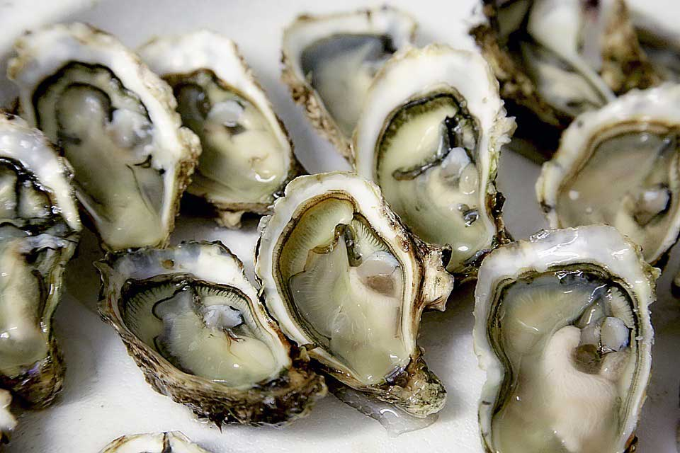 maryland oyster management plan