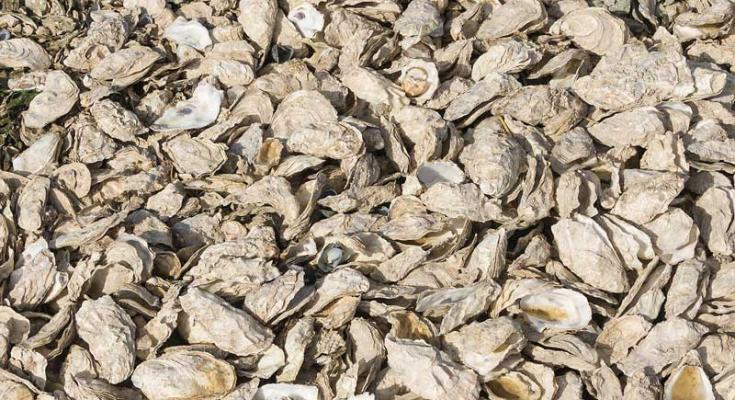 maryland oyster season