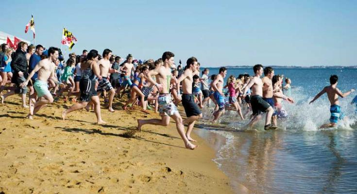 polar bear plunges