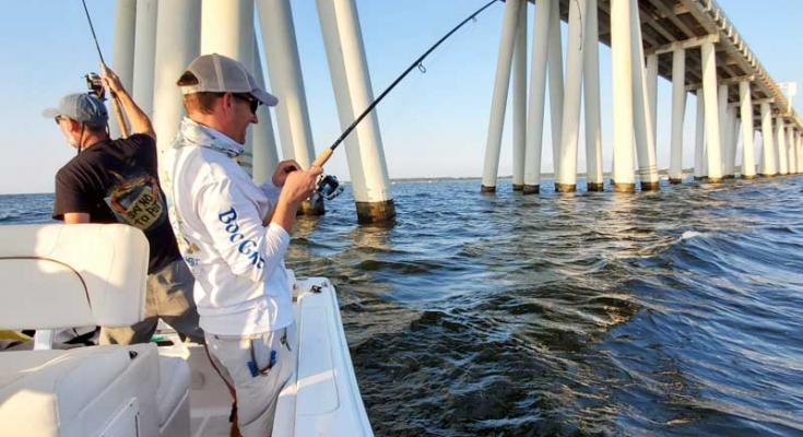 striped bass regulations
