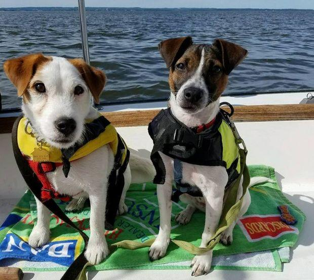 Make sure your dog is outfitted with a snug and comfortable life jacket. Charlie and Chauncey pictured. Photo by Loren Roos