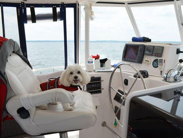 Mr. Wilson loves sitting at the helm. Photo by Barbara Freedman
