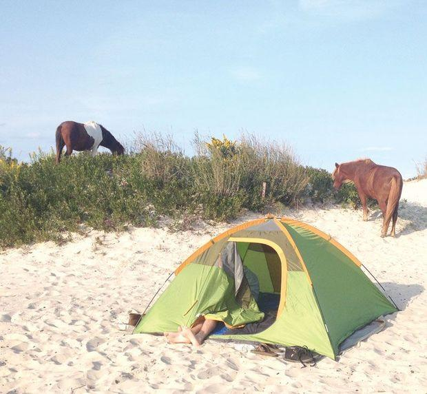 Head to Assateague Island State Park to camp or spend a day on the beach with the wild ponies.