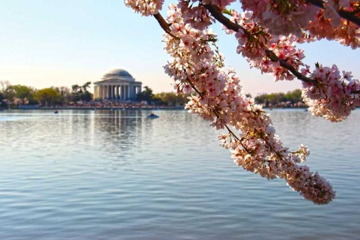 Visitors can rent pedal boats or swan boats on the tidal basin and visit the Jefferson Memorial where a 19-foot tall statue of Thomas Jefferson stands holding the Declaration of Independence.